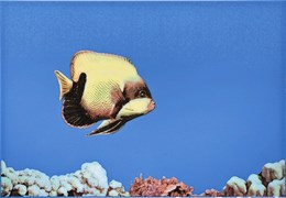 MONO FISH 3 Декор 27,5х40