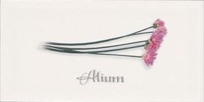 Decor ALIUM Blanco 10x20